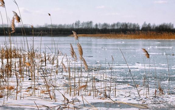 В Калининградской области под лед на реке провалился ребенок, его ищут спасатели