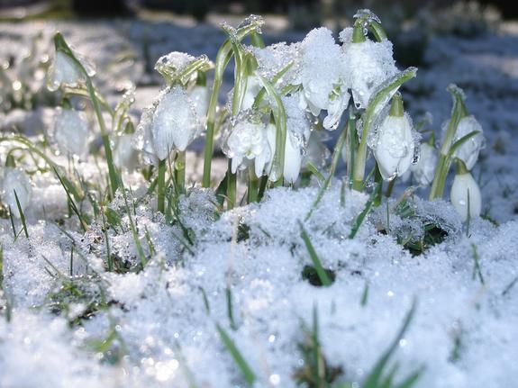 Синоптики прогнозируют в Москве оттепель после праздника 8 марта