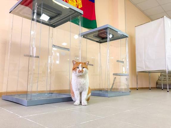 Кот Мостик  пришел со строительного участка на избирательный