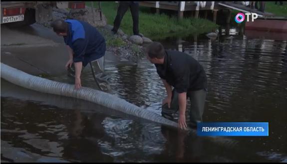 В Неве будут плавать 90 тысяч особей атлантического лосося
