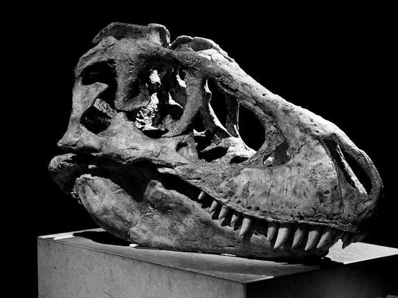 Бразильские ученые обнаружили новый древнейший вид динозавров
