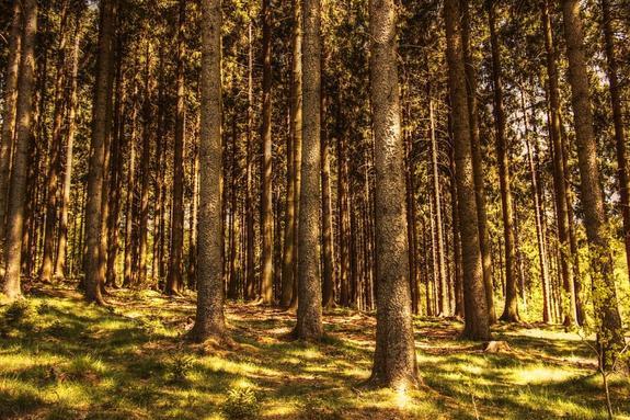 Спасатели ищут в лесу на Кубани двух пропавших мальчиков
