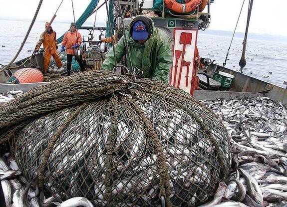 Вылов рыбы в Азово-Черноморском бассейне значительно снизился