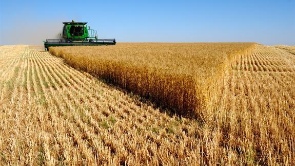 Немецкие эксперты прогнозируют дефицит зерна и рост цен на продукты