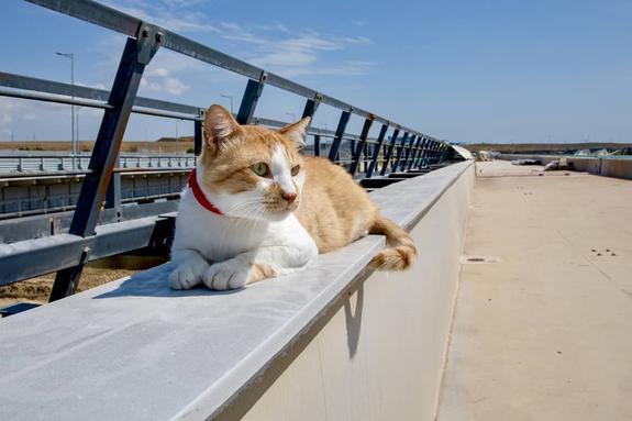Кот Мостик опубликовал фото с высоты арки Крымского моста