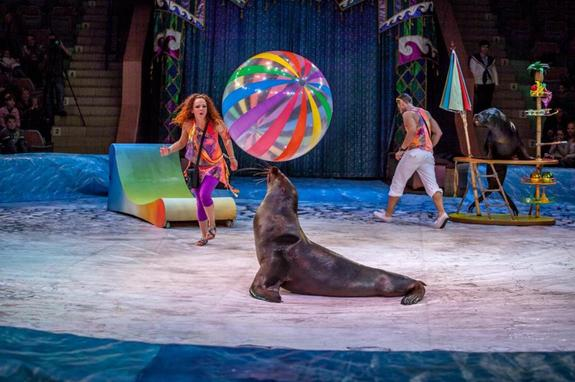 С 15 сентября в Челябинском цирке - Пингви-шоу «Ласта-рика»