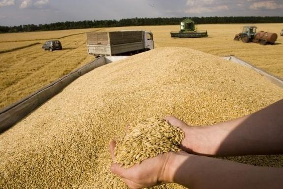 Москва может захватить рынок зерна ЕС, но Вашингтон против