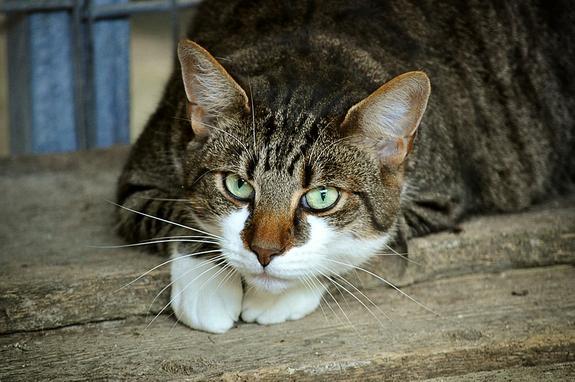 В Италии будут судить владелицу кота, упавшего на голову прохожему