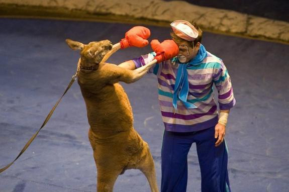 Цирковая экзотика от пингви-шоу «Ласта-рика»