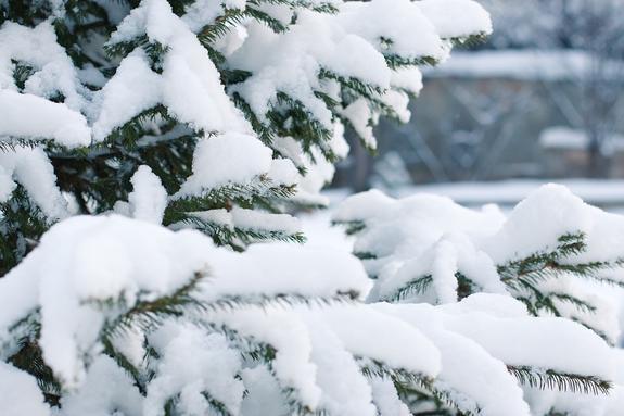 В Бурятии снегопад погубил часть урожая