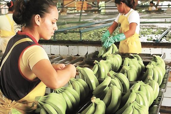 Мировая борьба за банан
