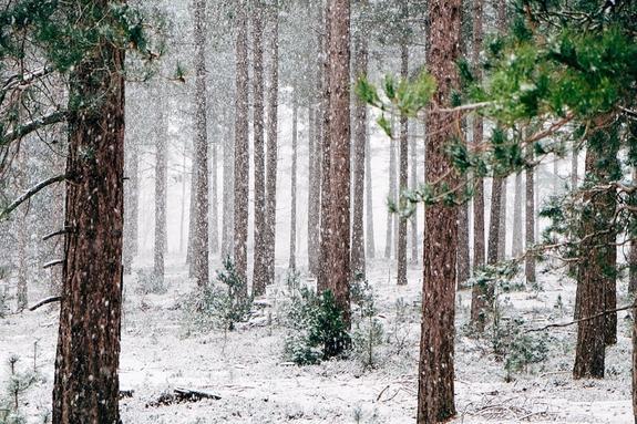Синоптики рассказали, какой будет грядущая зима