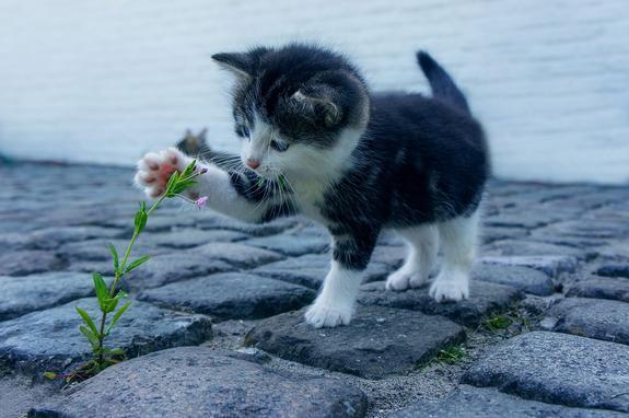 Студентка из Майкопа заплатила 340 тысяч, чтобы спасти бездомного котенка