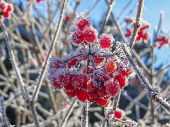 Синоптики обрадовали москвичей: ноябрь в столице будет аномально теплым