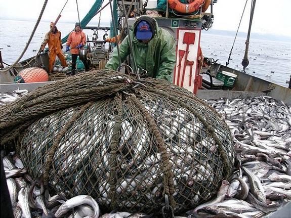 В Сахалинской области подвели итоги лососёвой путины 2018 года