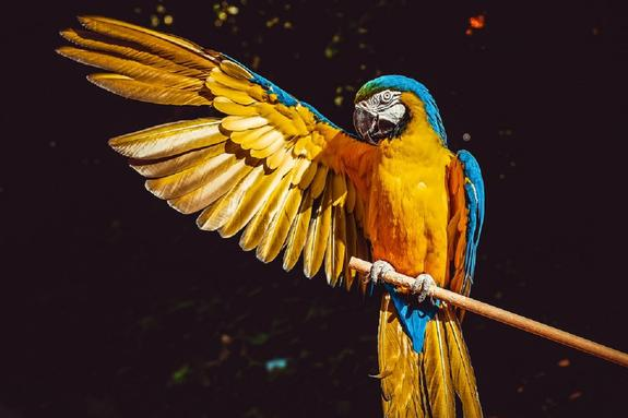 Ученые раскрыли причину долголетия попугаев