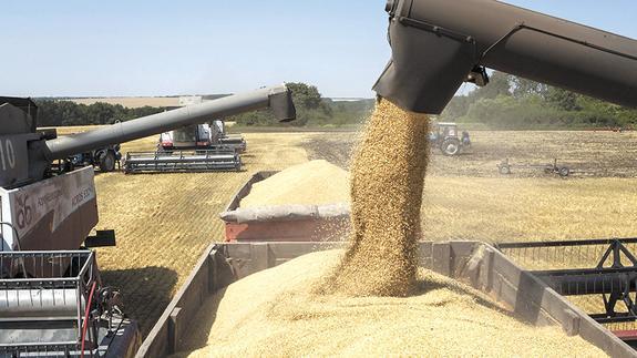Российское зерно пойдёт в Таиланд и Боливию