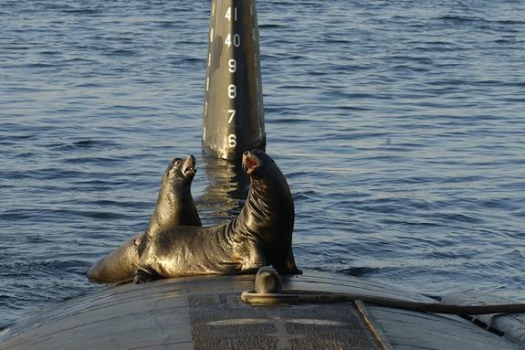 Шведы учили тюленей искать русские подлодки