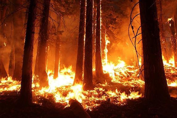 Лесные пожары вспыхнули в Приморье из-за малоснежной зимы