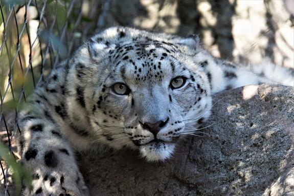 После гибели леопарда  Андреева высказалась по работе дрессировщиков Запашных