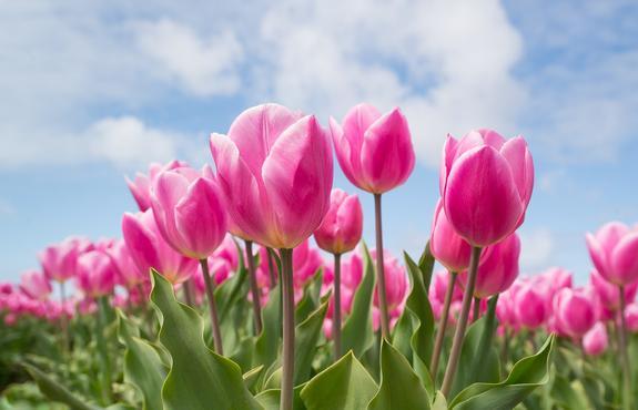 Какие цветы дарить на День всех влюблённых – советы флористов