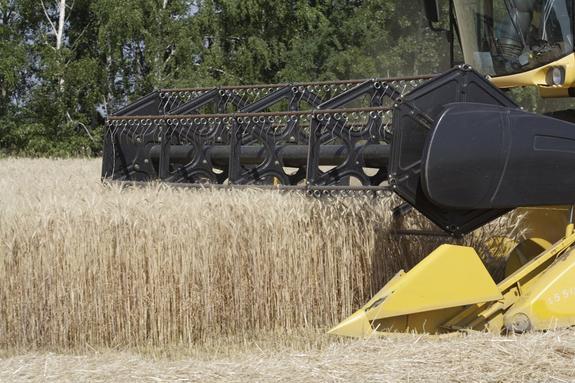 Урожай зерна превысит 120 млн тонн