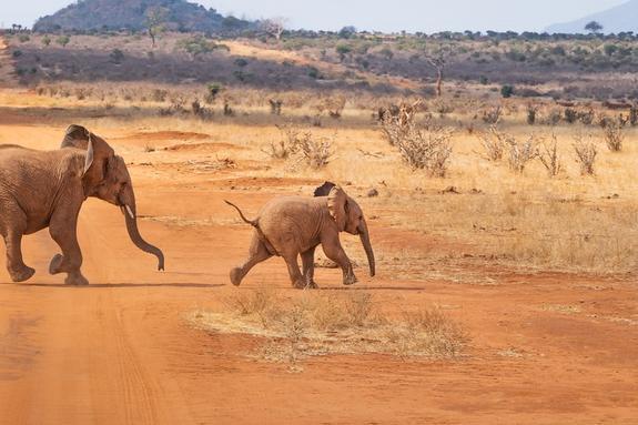 Розового слонёнка обнаружили в Южной Африке