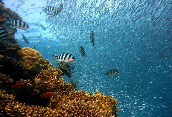 У побережья Италии обнаружен уникальный коралловый риф