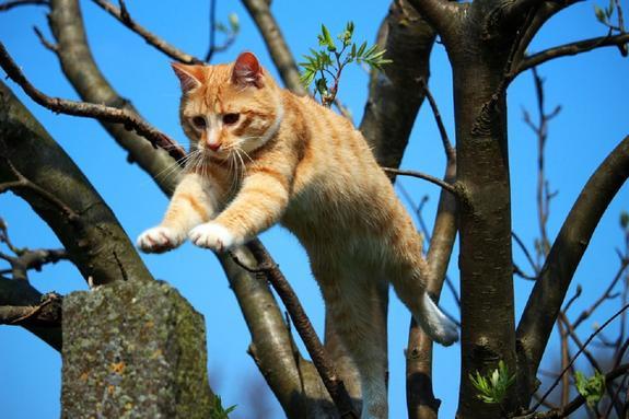 Самые знаменитые актеры-коты