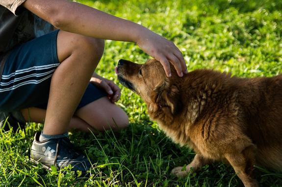 Для начинающих владельцев собак хотят ввести экзамен