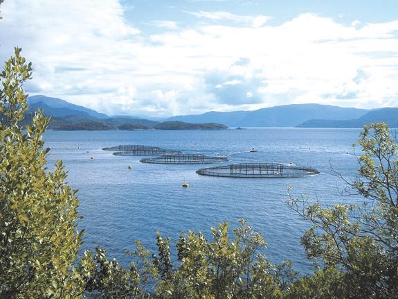 Токсичный норвежский лосось