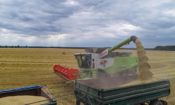 Экспорт зерна вырастет до 51 млн тонн