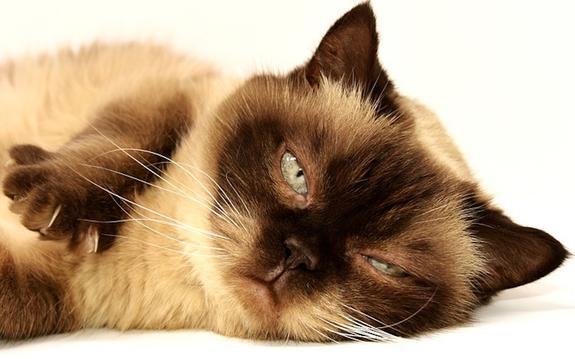 Ученые выяснили, страдают ли животные депрессией