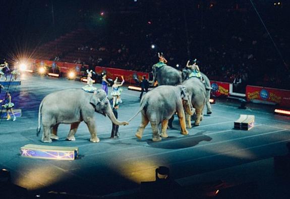 В Екатеринбурге сгорела фура для перевозки слонов немецкого цирка