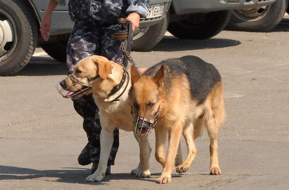 На западе Москвы из-за снаряда времен ВОВ эвакуировали школу