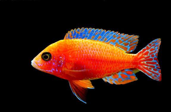 В Великобритании умерла  золотая рыбка Джордж, которой было 44 года