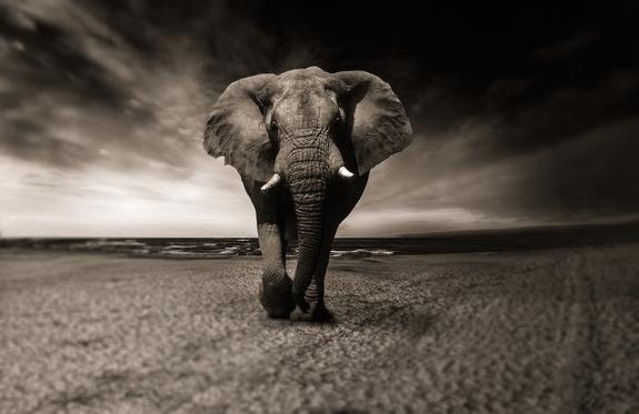 Слон в Индии насмерть затоптал пять человек