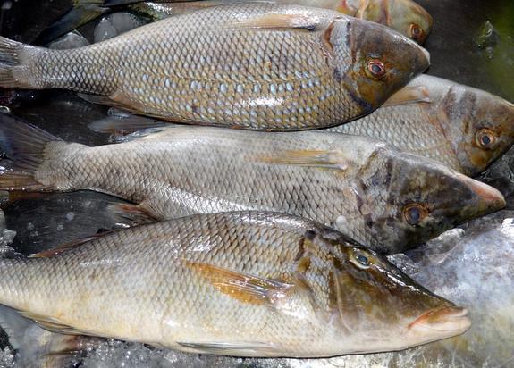 Жительница Новосибирской области избила полицейского пакетом с рыбой
