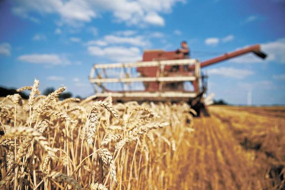 России угрожает рекордный урожай