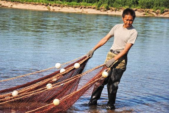 Коренные народы в Хабаровском крае требуют снять с них ограничения на вылов кеты