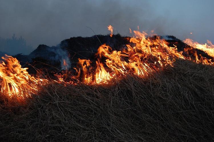 Спасатели рассказали, как правильно тушить травяной пожар