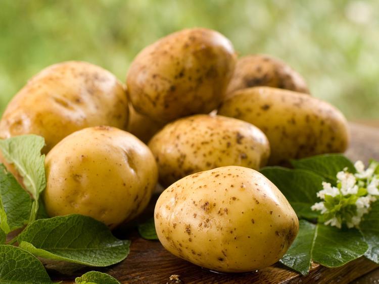 Урожаи и качество картофеля падают