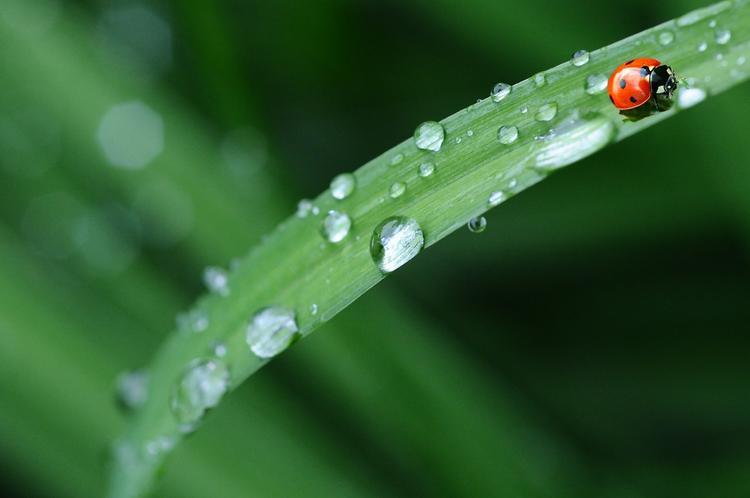 Гидрометцентр: на следующей неделе ожидается падение температуры и дождь