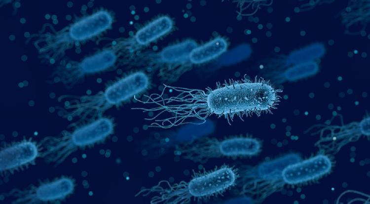 Учёные: теперь вредоносные бактерии можно найти за несколько минут