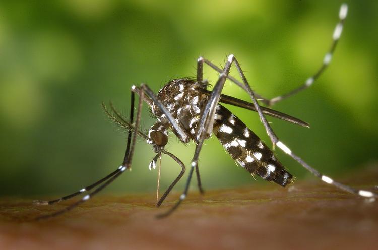 В Таиланде резко увеличилось число людей с диагнозом лихорадка Денге. Власти объявили эпидемию
