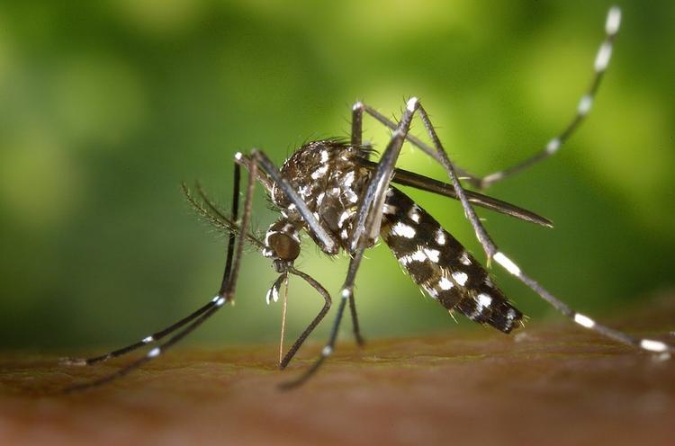 Эпидемию лихорадки Денге объявили в Таиланде