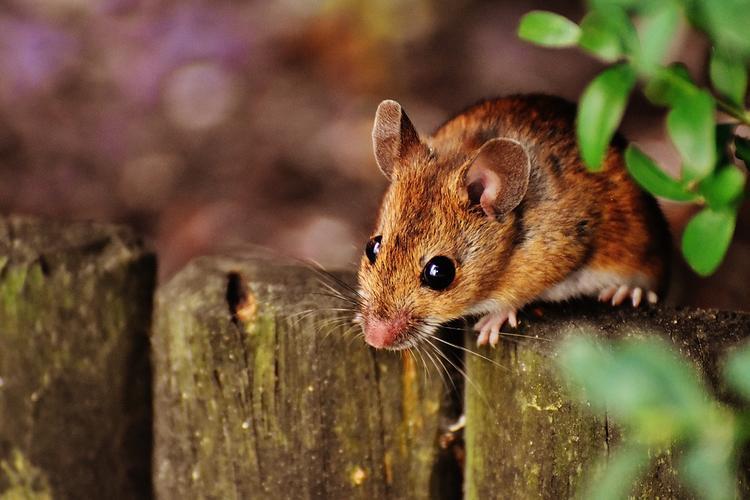 В Саратове  762  человека заболели  мышиной лихорадкой, все госпитализированы. 29 человек  - тяжелые