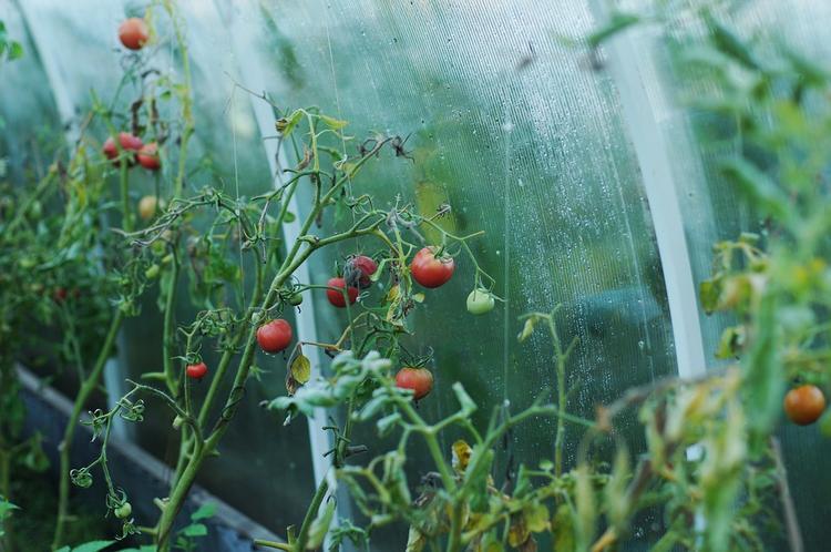 Лолита уехала из России без мужа и занимается огородом
