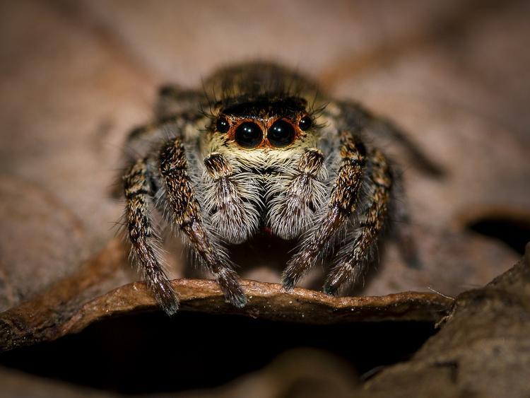 Психологи назвали самое страшное в мире животное