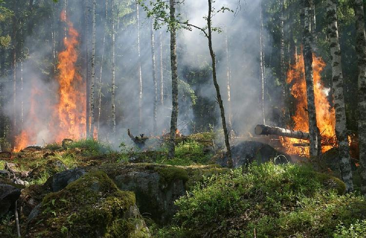Омская область: увеличился риск появления лесных пожаров